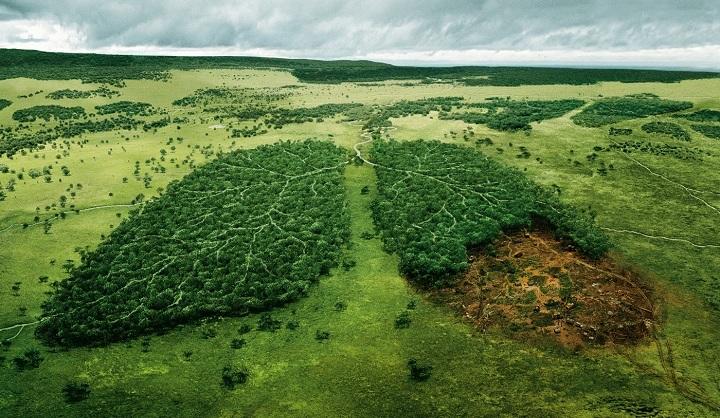 aplinkos-apsaugos-ir-sveikatos-diena